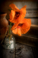 Two Poppies in a Vase
