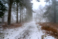 Last Snow on Cannock Chase